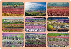 Calendario de La Floracion de Cieza de Fernando Galindo